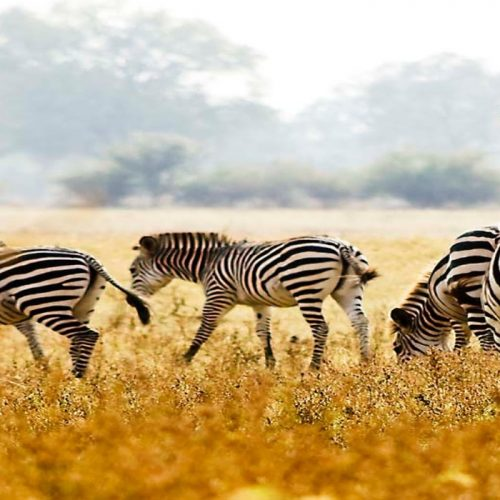 MOU between Zambia and U.S. set to Improve Wildlife Conservation
